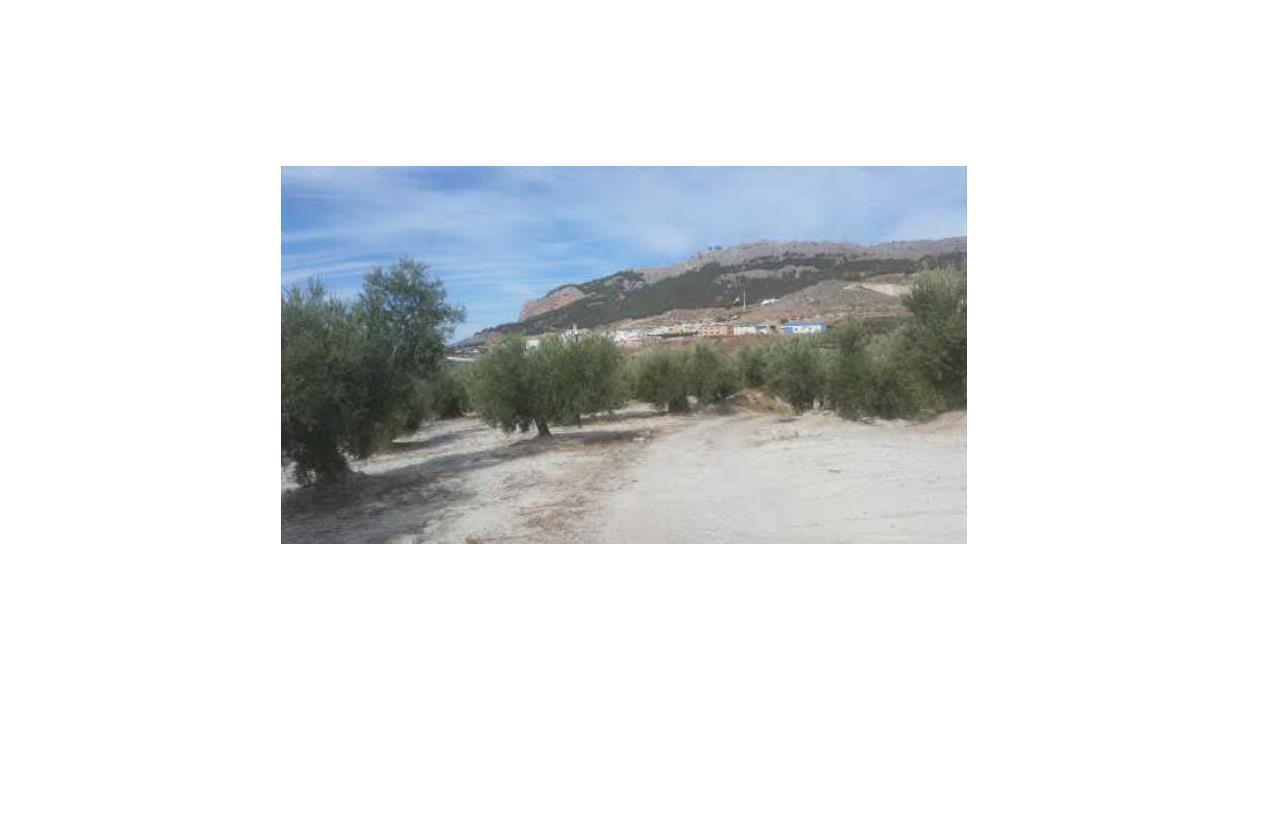Suelo en venta en Pegalajar, Pegalajar, Jaén, Calle Diseminado Pegalajar, 11.305 €, 3100 m2