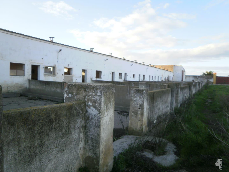 Industrial en venta en Puebla de Sancho Pérez, Badajoz, Calle Cabeza Gordo, 108.200 €, 962 m2
