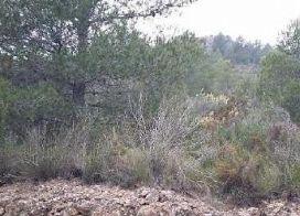 Suelo en venta en Azuébar, Azuébar, Castellón, Paraje Rocha Planta, 3.500 €, 4779 m2