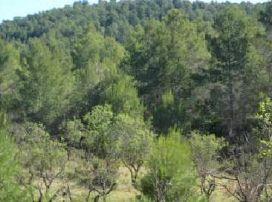 Suelo en venta en Espadilla, Fanzara, Castellón, Paraje Partida Losas, 32.200 €, 88167 m2