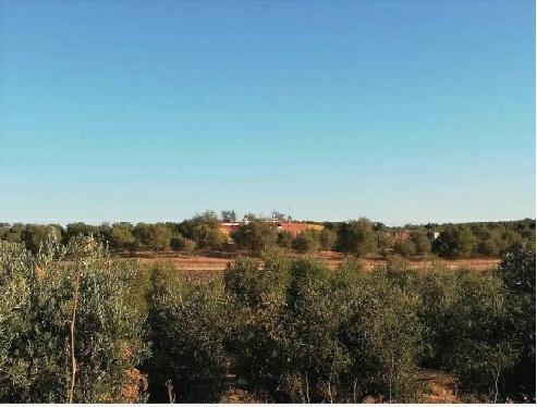 Casa en venta en Beas, Beas, Huelva, Paraje Cañada de la Zarza, 52.000 €, 1 habitación, 1 baño, 120 m2