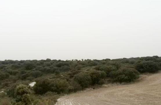 Suelo en venta en Almaluez, Soria, Paraje Collado Verde, 4.390 €, 51260 m2